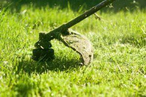 taglia erba